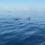 Dolfijnen naast onze boot, Griekenland